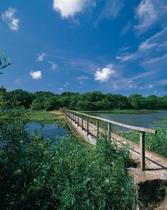 Bosherton Lily Ponds.....fab walk down to a beautiful beach...worth a visit if you're on Pembrokeshire some time.