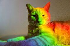 #rainbow  #image