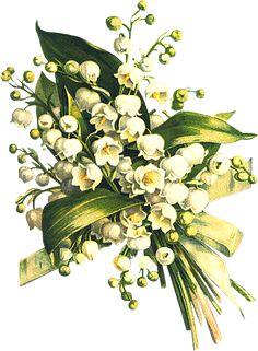 Glanzbilder - Victorian Die Cut - Victorian Scrap - Tube Victorienne - Glansbilleder - Plaatjes : Maiglöckchen - lily of the valley - muguet