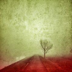 #mlhou #zimou #krajem #kolem #cestou #necestou #winter #bike #tree #road #fog