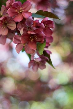 I love the wonderfully rich pink hue of this blossom
