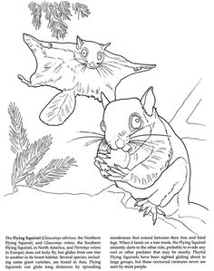 Welcome to Dover Publications Amazing Animals Coloring Book Dover Coloring Pages, Animal Coloring Pages, Coloring Sheets, Adult Coloring, Coloring Books, Flying Squirrel, Color Games, Dover Publications, Color Activities