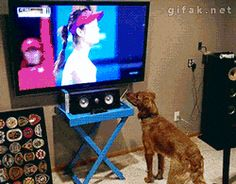 How much does this dog like tennis balls? THIS MUCH! Click GIF  #dogs #tennisballs