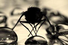 """Gewinnerin Publikumspreis August (""""Makrofotografie""""): Sandra Wagner #Foto #Macro #Makro #insect"""