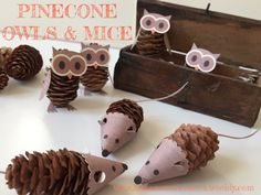 Pinecone owls and mice                                                                                                                                                                                 More