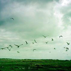 """@pocketstock's photo: """"The birds"""""""
