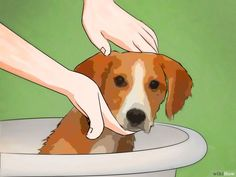 How to Get Rid of Fleas Naturally: 15 Steps (with Pictures)