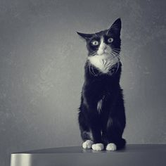 Cat photography in b&w