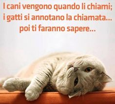 Dogs come when yo call them. Cats take note of your call. Cut Animals, Animals And Pets, Funny Animals, I Love Cats, Cute Cats, Funny Cats, Italian Memes, Cool Pets, Animal Quotes