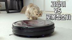 고양이와 로봇청소기 Cats VS Robotic Vacuum Cleaner 【수리노을 SURI&NOEL】