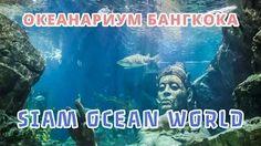 Всем привет! Друзья, наконец-то дошли руки доделать видео для статьи про Океанариум в Бангкоке. Вот небольшое напоминание для тех, кто не в курсе или не помнит: Океанариум Siam Ocean World в Бангкоке является вторым по величине Океанариумом в Юго-Восточной Азии и входит в десятку самых посещаемых достопримечательностей Таиланда.  Полную статью можно найти здесь: http://travelasis.info/podvodny-e-priklyucheniya-v-okeanariume-bangkoka-siam-ocean-world/