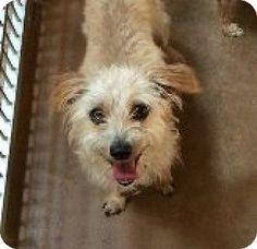 Burlington, WA - Terrier (Unknown Type, Medium) Mix. Meet Armando, a dog for adoption. http://www.adoptapet.com/pet/13351856-burlington-washington-terrier-unknown-type-medium-mix