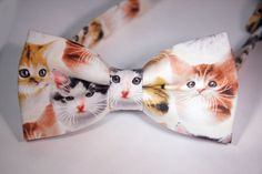cats Cats, Accessories, Gatos, Kitty, Cat, Cats And Kittens, Kittens