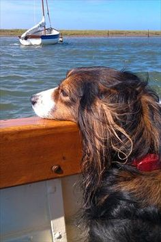 Why did you bring me on this boat?! You know I get sea sick...ugh