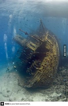 Shipwreck in the Red Sea, so fuc*ing cool