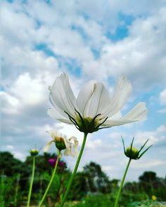 #eljardindegaia #elescorial #sierradeguadarrama #madrid #estaes_madrid #estaes_espania #huerto #huertourbano #huertoecologico #flores #flores #cosmos #cosmosflower #flowers #flowerstagram #flower_daily #flowers #flowerpower #floweraddict #flowering #flowers_super_pics #flower_perfection #love #lovenature #naturelovers #naturephotography Degu, Diy Wood Signs, Silk Flower Arrangements, Love Home, Small Trees, Garden Planters, Silk Flowers, Madrid