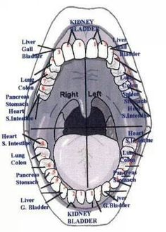 Not a foot chart, but interesting! Teeth connected to organs