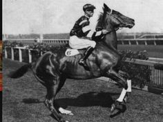 Australian legend Phar Lap.Sadly,he died suddenly and unexpectedly after his final race at Mexico's Agua Caliente race course.The cause of his death is still a subject of debate.
