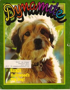 BENJI in Dynamite magazine. Could buy it at school through the Scholastic Book Club! Vintage Toys 1970s, Vintage Dog, Retro Toys, Famous Dogs, Teen Humor, Childhood Days, Magazines For Kids, Comic Panels, People Magazine