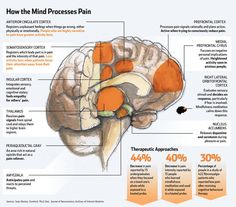 How the Mind Processes Pain