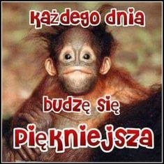 Zwierzęta Night Quotes, Motto, Good Morning, Haha, Coaching, Jokes, Humor, Luther, Frases