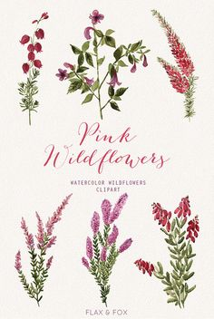 This set of high quality hand painted water-colour floral leaves and backgrounds. Perfect graphic for wedding invitations, greeting cards, photos, Watercolor Backgrounds, Floral Watercolor, Watercolor Paintings, Clipart, Succulents Drawing, Main Image, Floral Wedding Invitations, Party Time, Wild Flowers