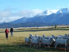 The Croft, Te Anau, New Zealand Working Sheep Farm