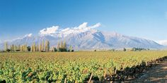 Maipo Valley - vineyards