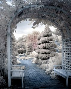Rose Arbor Photograph, trees benches surreal romantic dreamy blue pink infrared 8x10 print - View from the Rose Arbor