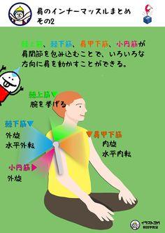 おはようございます。今日のテーマは、    「肩のインナーマッスル まとめ」    です。    肩のインナーマッスルである  棘上筋(きょくじょうきん)、  棘下筋(きょくかきん)、  肩甲下筋(けんこうかきん)、  小円筋(しょうえんきん)の  4つのインナー