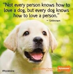 Truer Words Have Never Been Spoken About A Dog They Are The Most Loving Animals In World