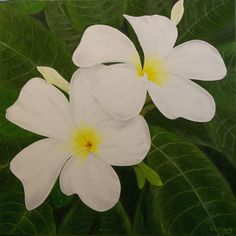 """Oil painting titled """"White Plumerias"""", done on a 30"""" x 30"""" x 1.5"""" canvas.  SOLD"""