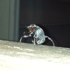 An ugly bug that I haven't been able to identify yet.