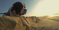 Phong cách chụp hình độc đáo - biến chó cưng thành các nhân vật khổng lồ - http://www.daikynguyenvn.com/tin-giai-tri/phong-cach-chup-hinh-doc-dao-bien-cho-cung-thanh-cac-nhan-vat-khong-lo.html