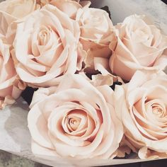 Imagine flowers, pink, and roses