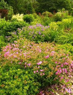 Display gardens at Anna's Perennials.