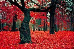 Crimson forest, Poland via earth porn website