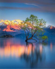The lone Tree - beautiful Lake Wanaka, South Island, New Zealand ~ Beautiful World, Beautiful Places, Beautiful Pictures, Beautiful Beautiful, Stunning View, Beautiful Sunset, Landscape Photography, Nature Photography, Photography Tips