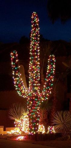 Arizona Christmas Tree