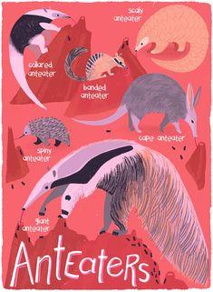 Anteaters Species ID Card Illustration