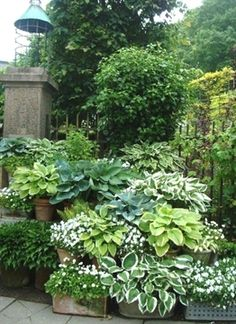 10 best shade garden ideas for the backyard that not only looks beautiful and tidy but also looks quite swanky and feel cool. Backyard garden small spaces 10 Best Shade Garden Ideas For The Backyard - decoratoo Garden Cottage, Garden Pots, Green Garden, Potted Garden, Tropical Garden, Shade Garden Plants, Porch Garden, Shaded Garden, Garden Water