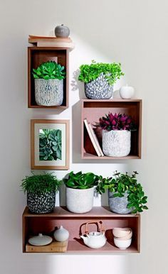 Feng Shui plants for harmony and positive energy in the living room More