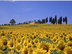 tuscany italy - Google Search