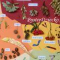 Dary jesieni - suszone owoce drzew z polskich lasów i parków jako tablica edukacyjna dla dzieci - makieta DIY