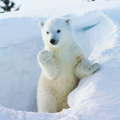 Raise your paw if you have taken your pledge to conserve water! This Earth Month, April 1-30, be sure to take your pledge at www.mywaterpledge.com for your chance to win 100's of prizes! #mywaterpledge