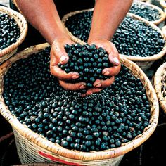 baskets of acai berries