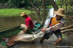 Fishing in Brazil » Biskvitka.net - The First Bulgarian Entertainment Portal