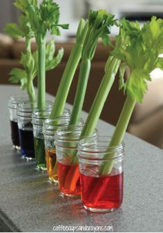 Celery Science Experiment for Kids – An easy experiment that makes science both cool and colorful!