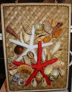 Exotic Starfishes, Sea Urchins and Sundollars in Stock at Tropical Treasures!
