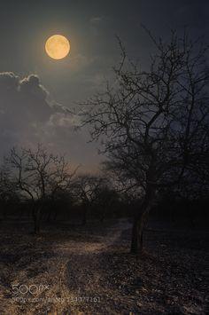 fused луна by Aleksandr Makaranka / Moon Photography, Landscape Photography, Moonlight Painting, Night Scenery, Shoot The Moon, Good Night Moon, Beautiful Moon, Fantasy Landscape, Moon Art